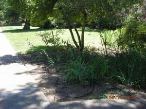 Non-landscaped edge of yard