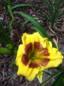 jason salter day lily