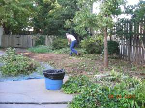 BEFORE: We cleared out all the overgrown kudzu and weeds...