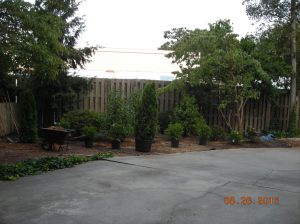 setting out plants tuesday august 23