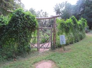 Sukki Roth's herb haven