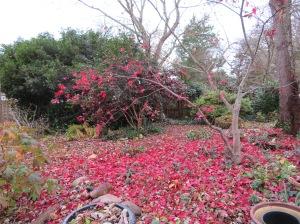 leaves-gone