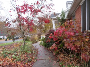 oak-leaf-hydrangeas