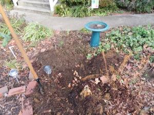 planting-bulbs-beside-bird-bath